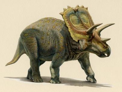 anchiceratops.jpg